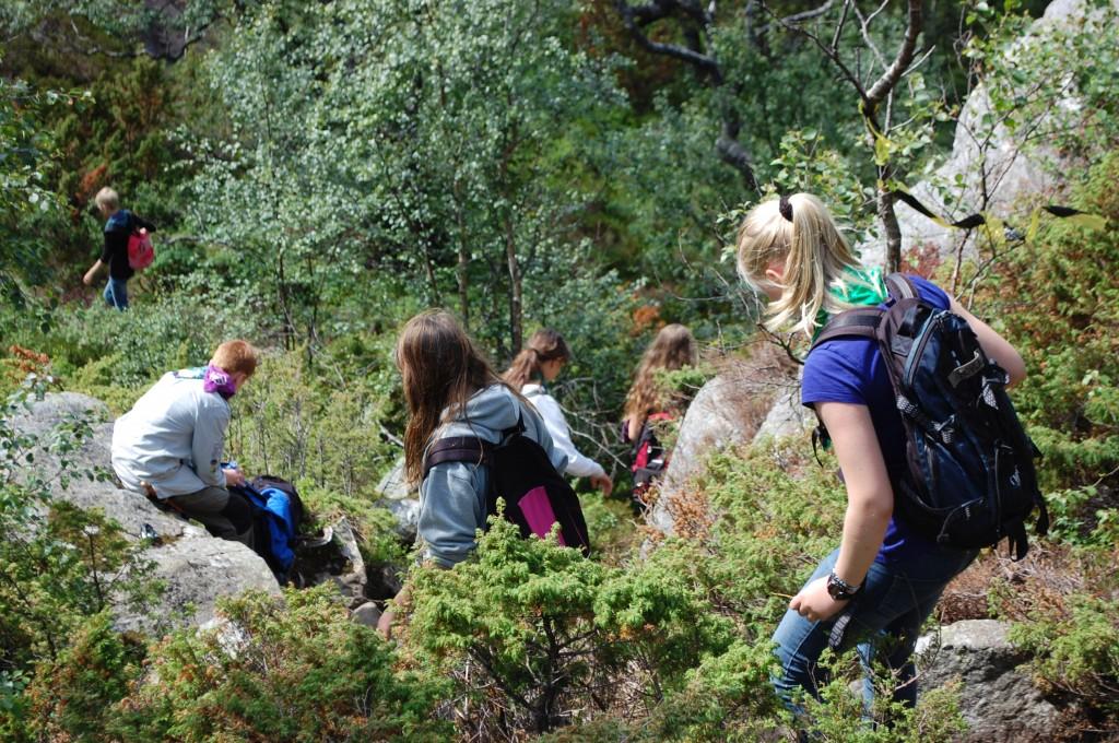 Stavanger 2013: Skogdue på veg ned fra Preikestolen.Foto: Hanne Birte Hulløen
