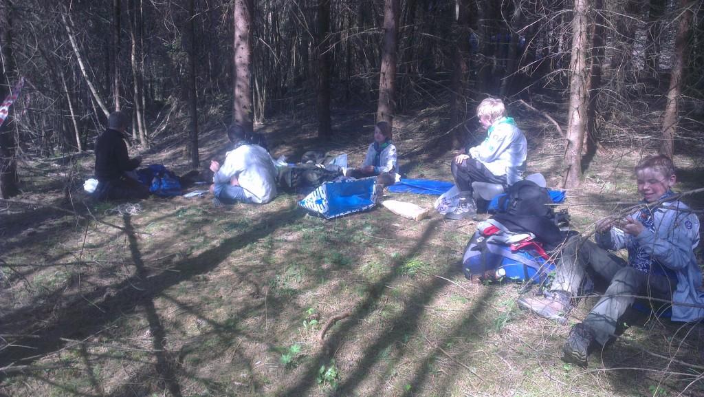 Bever brukte også litt tid på løypa. De spiser lunsj før de bygger huk. Foto: Trond Engen